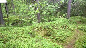 Vihreää metsää ja maastoa. Kuvassa keskellä painauma tai kuoppa.