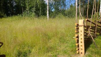 Oikeassa reunassa pisteaita, vasemmalla pitkää heinää ja taustalla puita.